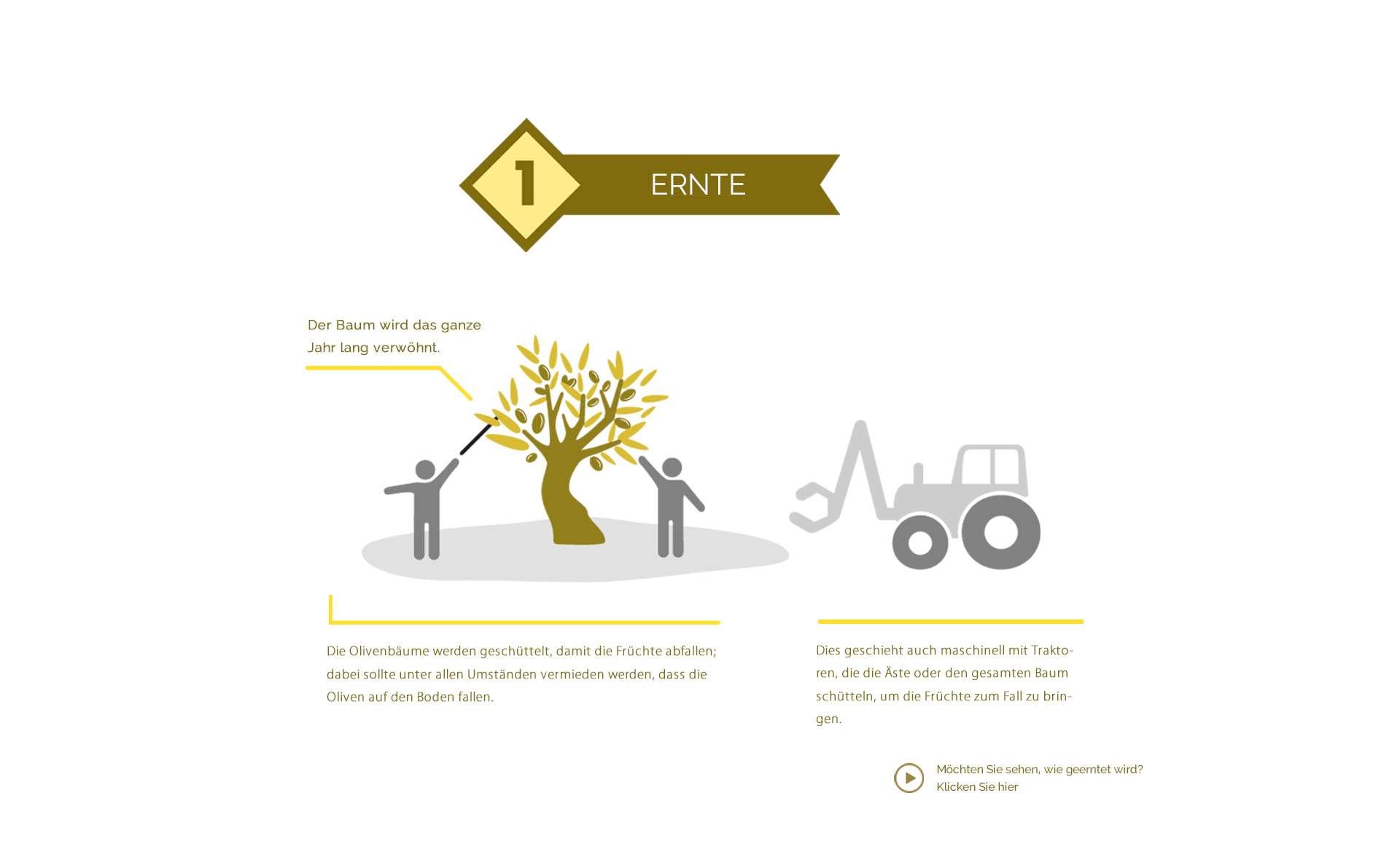 Ernte und Herstellung von Olivenöl