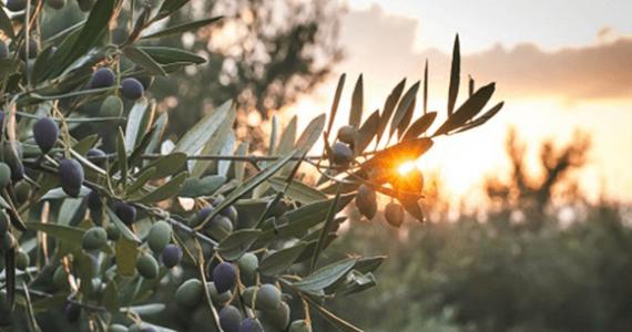 Globale Kampagne 2013: Genießen sie unser Olivenöl. Genießen Sie Spanien Kosten Sie die spanische Lebensart. Wie lautet das Rezept?
