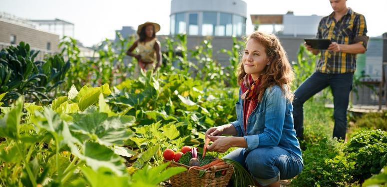 Wer sagt denn, Gemüsegärten seien nichts für die Stadt?