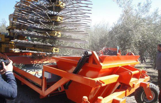 Innovationen und neue Technologien bei der Olivensorte MECAOLIVAR
