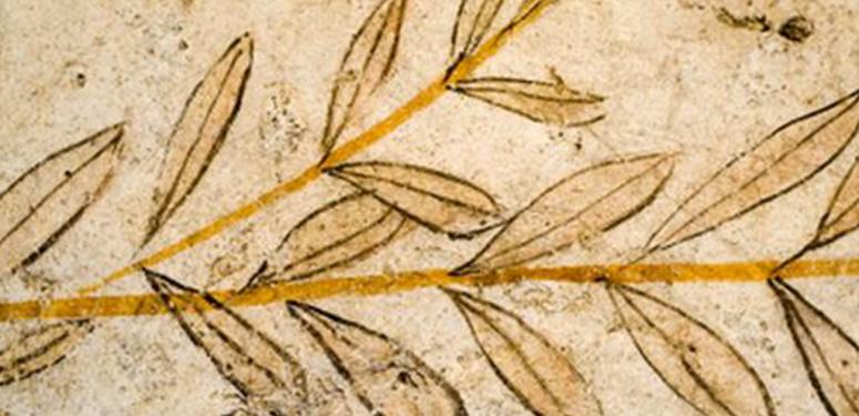 Das Olivenöl in der Geschichte der Menschheit (I)